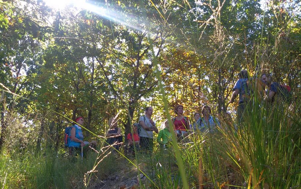 Orientamento nel bosco