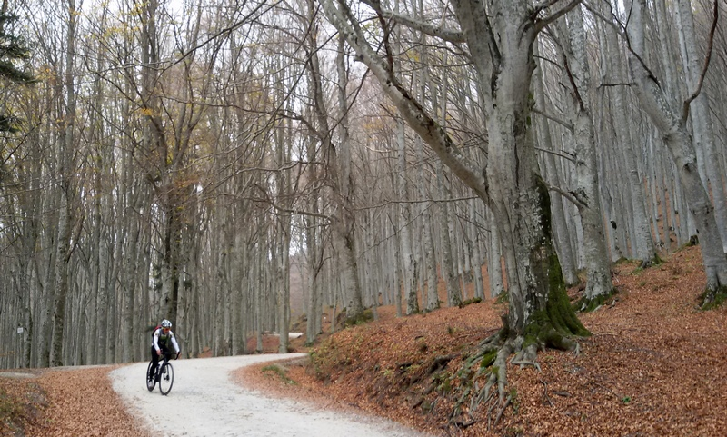 parco foreste casentinesi in bici