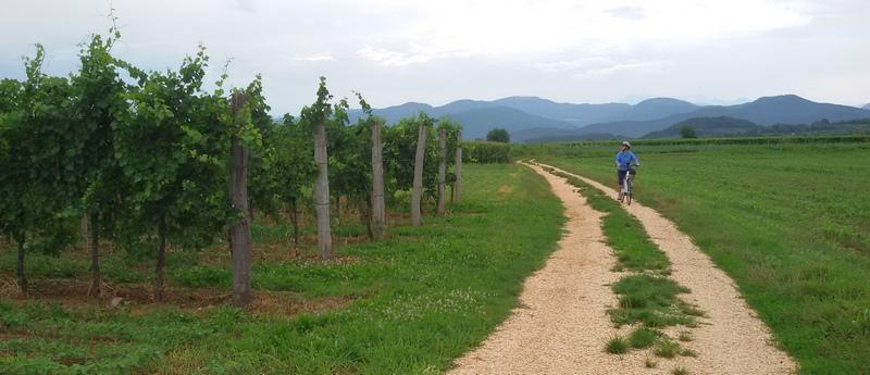 sentieri ciclabile tra i vigneti nel Collio, in Friuli Venezia Giulia