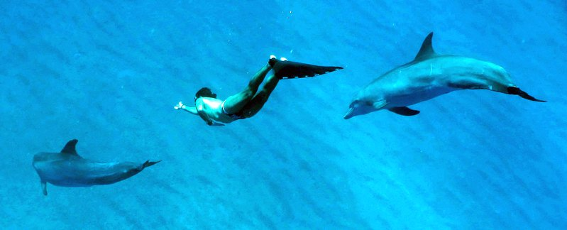 allenare il respiro: Mike Moric con due delfini alle Bahamas
