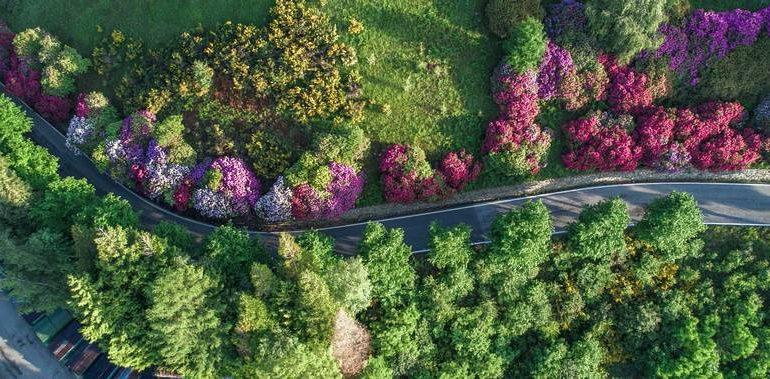 Panoramica Zegna con fioritura rododendri