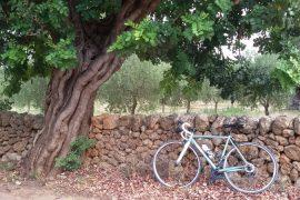 come si crea un blog Ladra di biciclette Mariateresa Montaruli bici