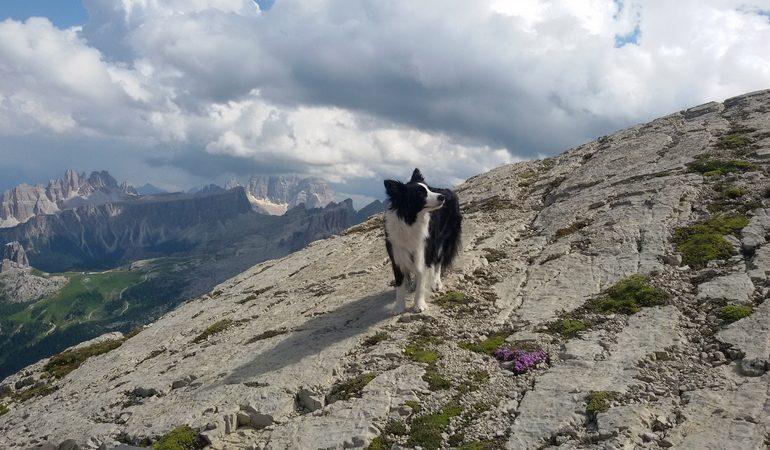 Laya, borfer coollie di Mariateresa Montaruli sul Lagazuoi per Cortina tra le righe