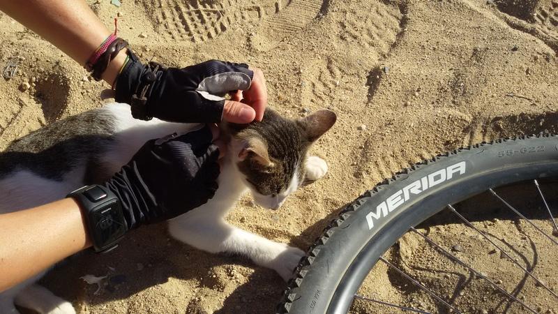 gattino con ruota di bicicletta sulla spiaggia di es Castell