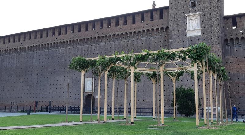 pergolato di gelsi al Castello Sforzesco a Milano
