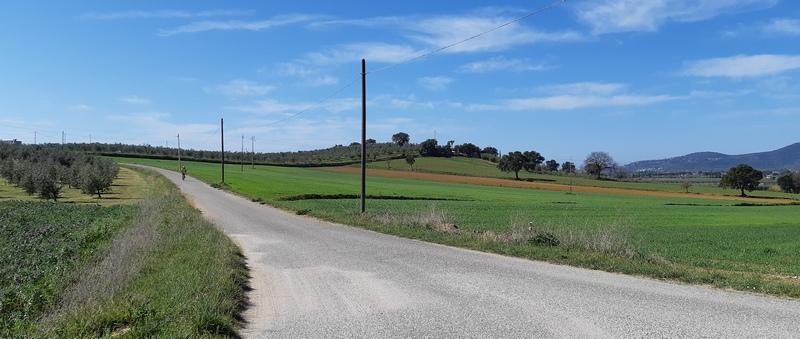 strada bianca in Maremma comune di Castiglione della Pescaia