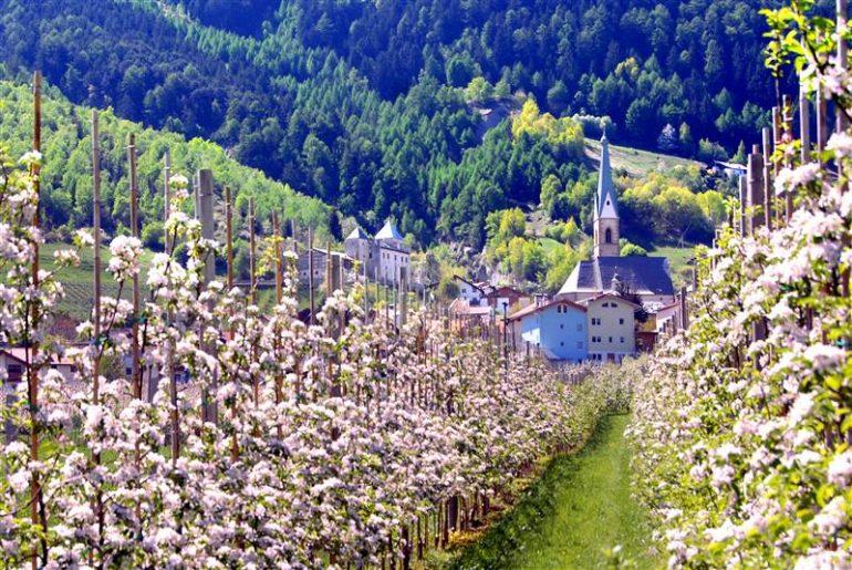 in bicicletta tra i meleti in fiore della Val Venosta