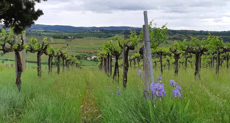 colline tra Usella e Fucecchio