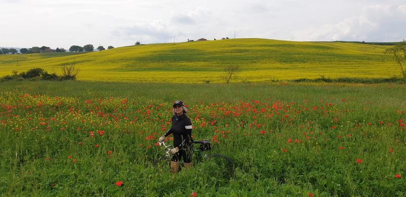 Campo di papavero sulla strada per Bagno Vignoni