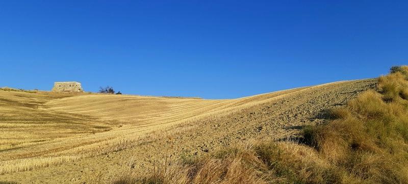 campo di grano vicino Craco in Basilicata