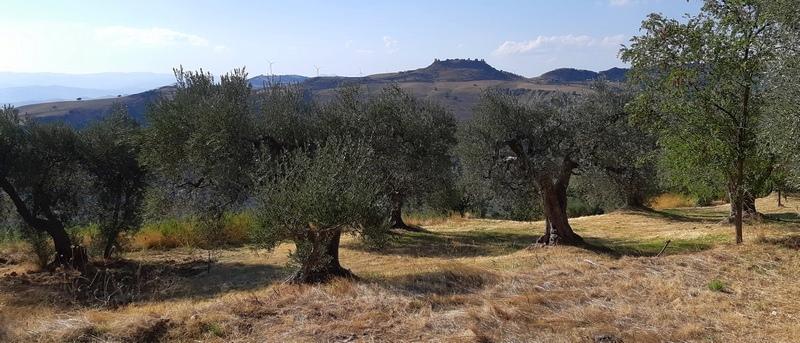 castello di Uggiano e ulivi in Basilicata zona calanchi