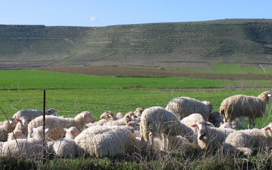 paesaggio sardo nel Sarcidano con pecore