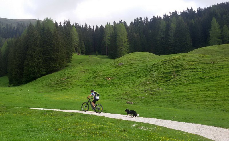 val di fiemme in bici con border collie