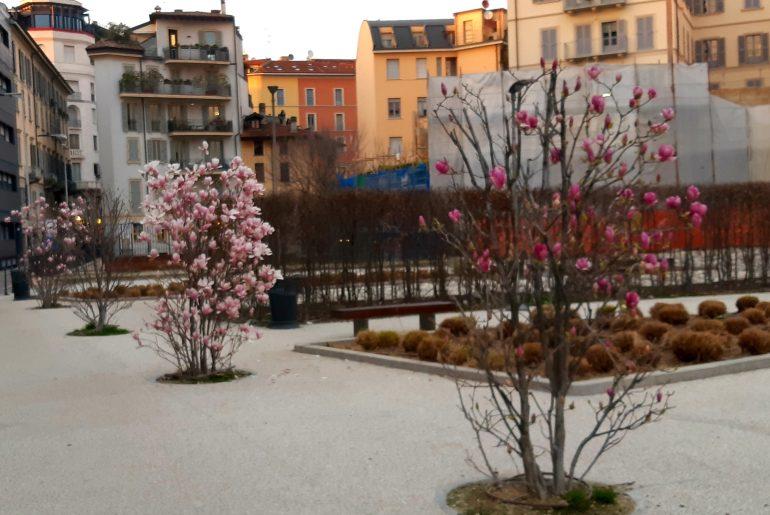 Milano ai tempi del Coronavirus: magnolie e piazze vuote, foto Mariateresa Montaruli