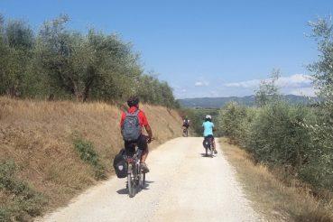 Via Francigena in bicicletta tra gli ulivi