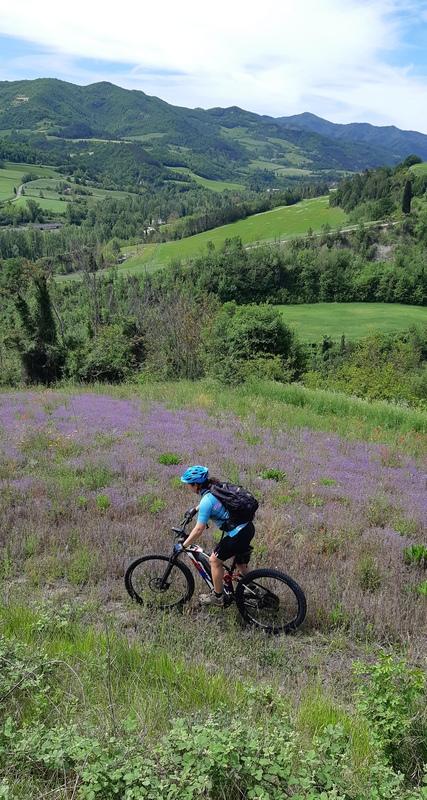 fioriture spontanee sulla Via di Dante in bicicletta